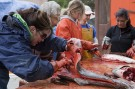 Family cleaning salmon on Willows 16th Birthday