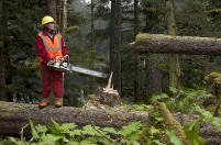 Sarah cuts down a tree
