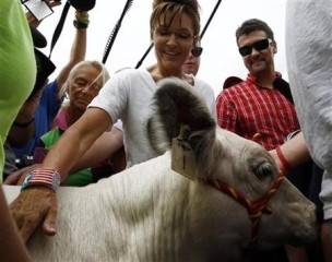 Sarah and Todd look at a bull calf at Iowa State Fair