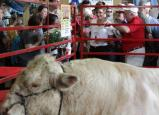 Sarah visits bull winner at Iowa state fair